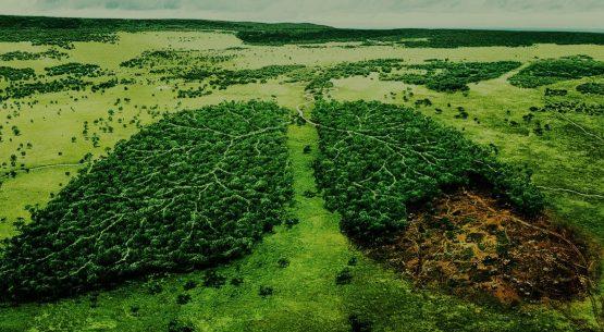 A környezet alkotmányos és büntetőjogi védelme, különös tekintettel a vizek élővilágának oltalmára